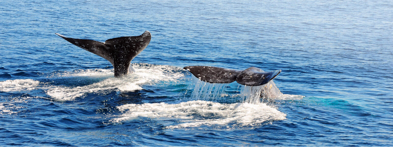YachtLife's top Yachting Activities in Newport Beach - Whale Watching