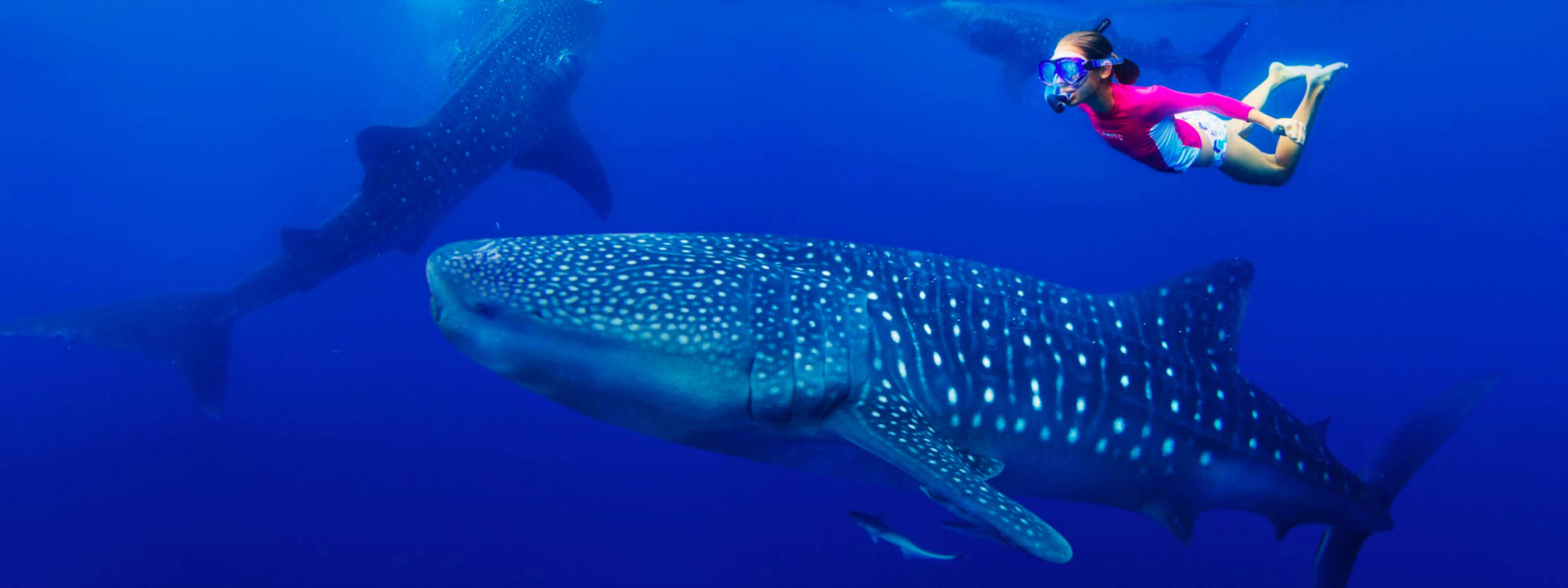 YachtLife's top Yachting Activities in Cancun - Whale Sharks in Cancun